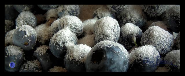 MYRTILLES bleuets du canada